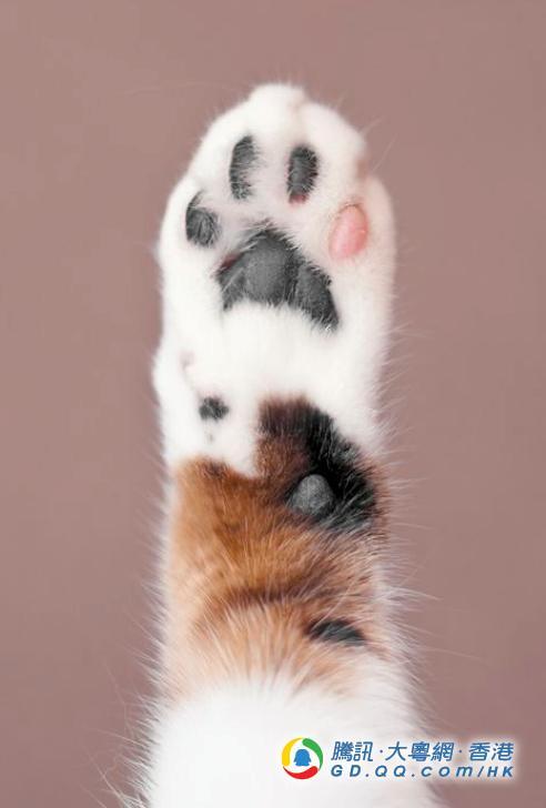 猫奴挚爱 Q弹手感 肉球味肥皂