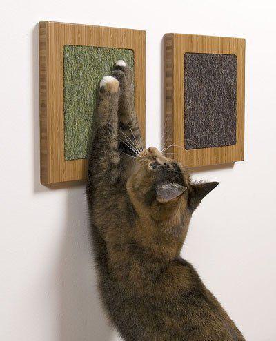 """猫咪拥有的那些""""坏习惯"""""""