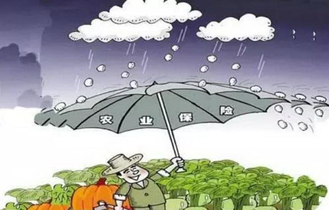 """农业保险如何做好农民""""保护伞""""?"""