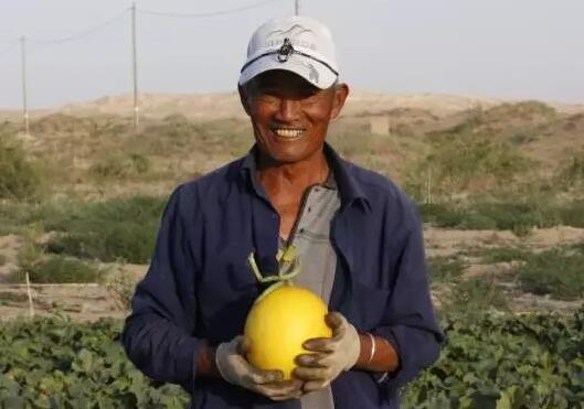 一口蜜瓜,拯救5万平米沙漠绿洲