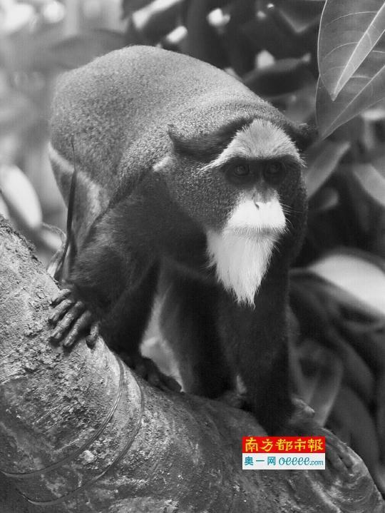 广州三大赏猴景点强烈推荐图片