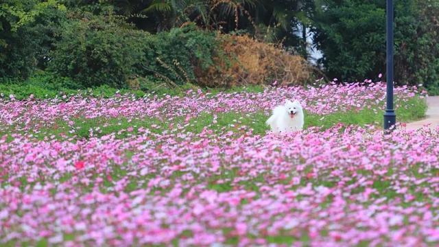 美如壁纸!阳春三月佛山花开满城