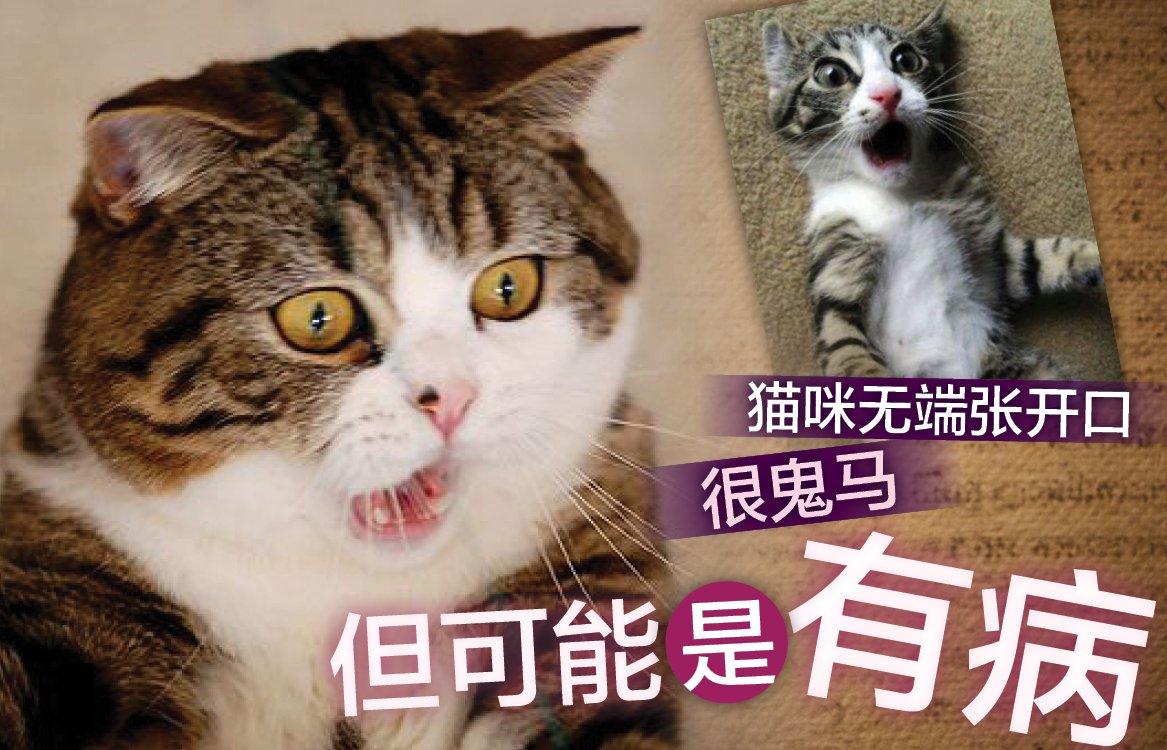 猫咪张开口原来是因为呼吸困难?