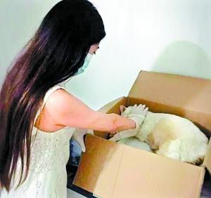 """广州90后美女:卖80万婚房为宠物""""善终"""""""