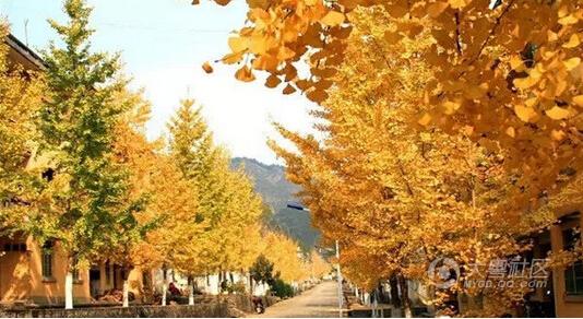 美景就在身边 盘点广东最美省道周边景点!