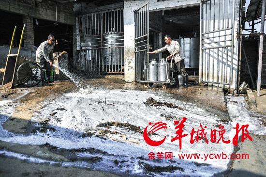 广东奶农每天倒奶超20吨 4点挤奶后又倒掉