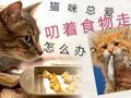 猫咪叼食物走原来是本能反应
