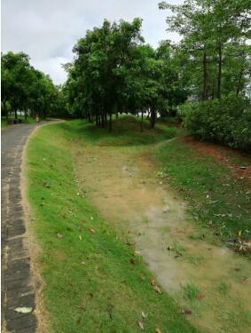 暴雨不看海 光明区海绵城市建设显成效