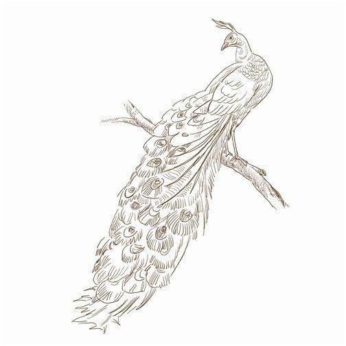 艺术与孔雀peacock:拟人化的骄傲的象征