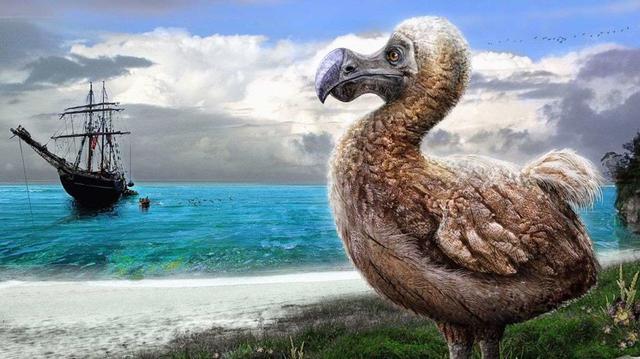 """在地球上已消失的""""多多鸟"""""""