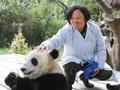 广州女熊猫饲养员:每天劈几十斤竹子