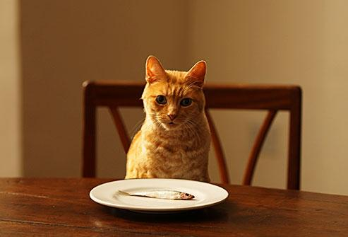 猫咪正确饮食知多D