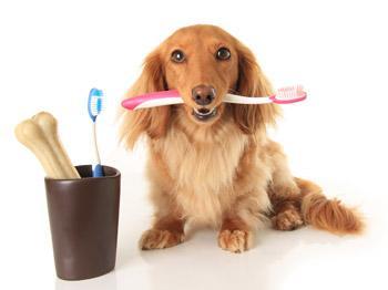 帮助狗狗清洁口腔的谬误