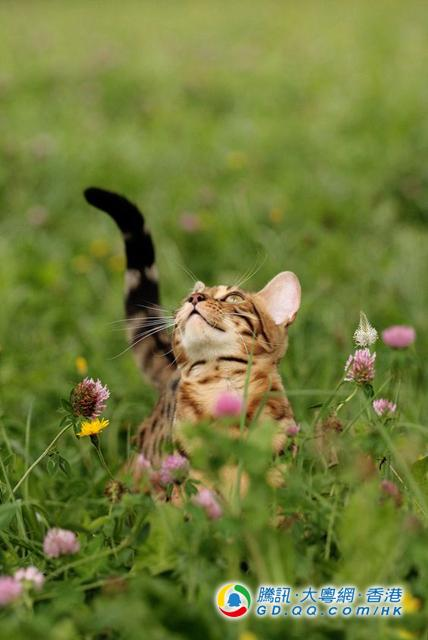了解猫咪 尾巴摆动必有用意