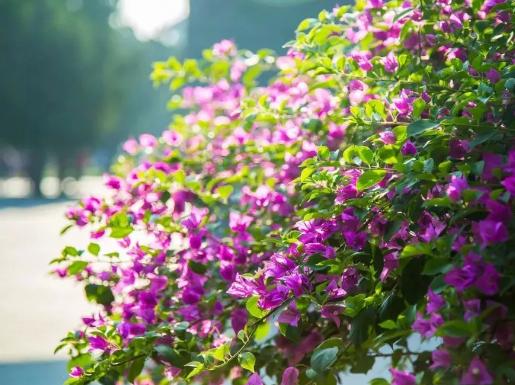 深圳公园11月赏花指南!一起去赏花吧