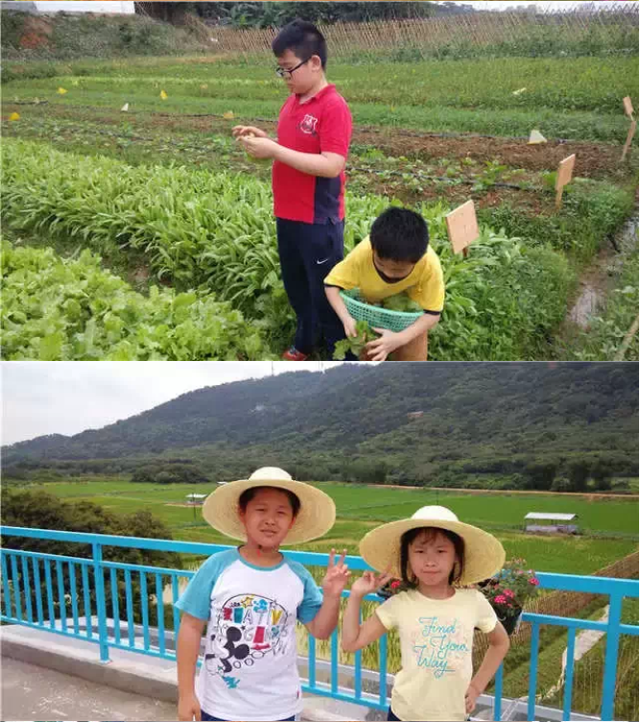 """""""别羡慕出国了"""",180天,奶爸在广州DIY出一个属于自家的艾米农场"""