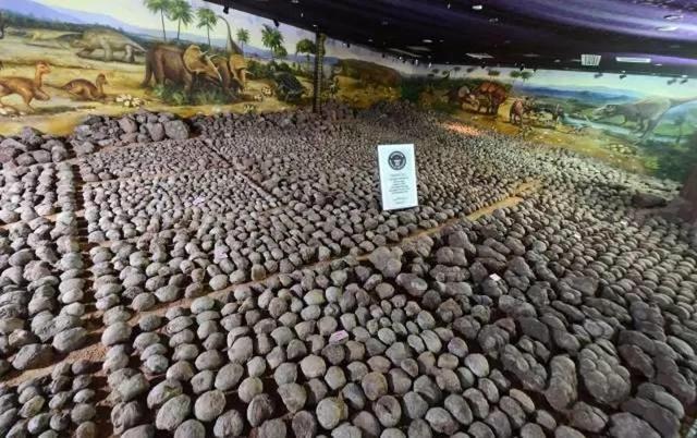 河源今天实施新条例:私人收藏恐龙蛋也是违法