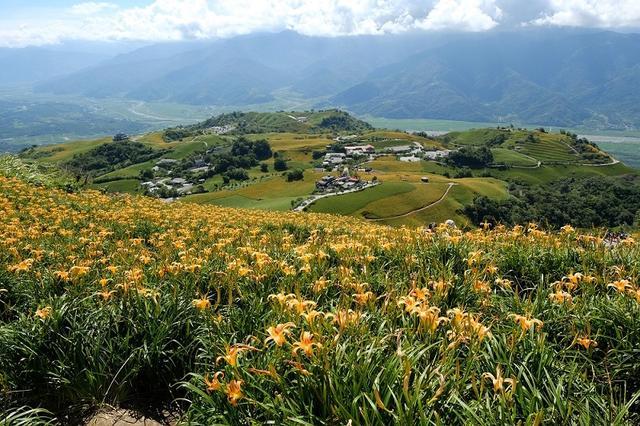 忘忧探花 台湾美丽的金针花海
