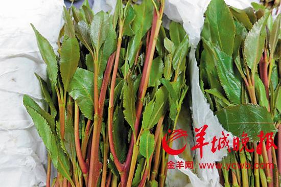 新型毒品流入广州 形似苋菜可晒成茶叶(图)