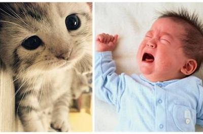 11岁男孩患猫叫综合征 啼哭像猫叫声