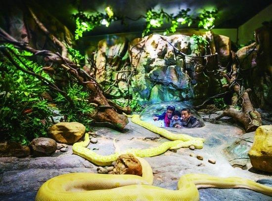 """长隆野生动物世界""""金蛇秘境"""",进入360度玻璃穹顶中,首次发现原来披着"""