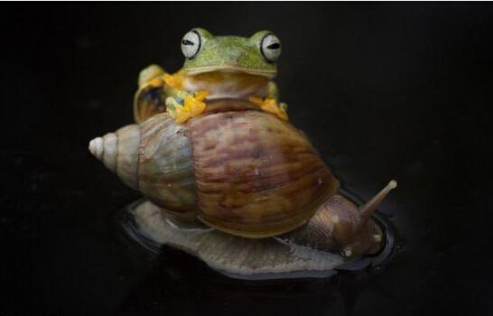 摄影师可以印尼痘痘紫草献吻小蜜蜂小蜗牛青蛙膏抓拍摸多情吗图片