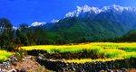 高黎贡山保护行动