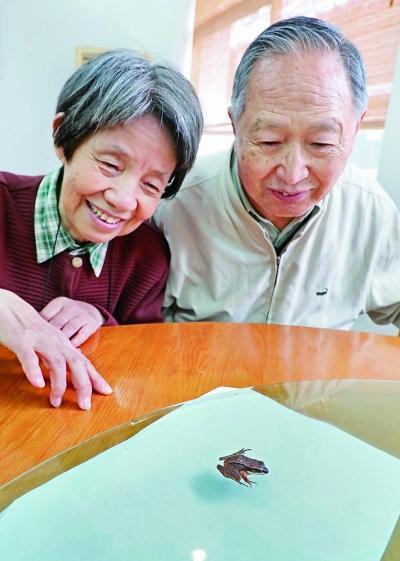 """江苏发现珍稀凹耳蛙,给""""超声助听""""以有益启发"""