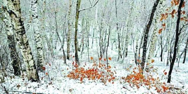 脏厂房变绿化园,北京十万亩拆迁腾地将成风景林