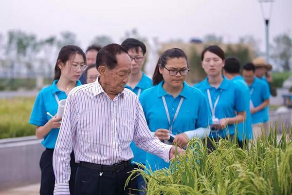迪拜酋长看上袁隆平这项研究,要在沙漠建绿洲