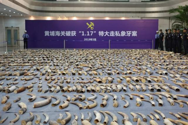 中越两国三方海关共商打击濒危物种制品走私