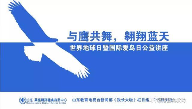 与鹰共舞,翱翔蓝天