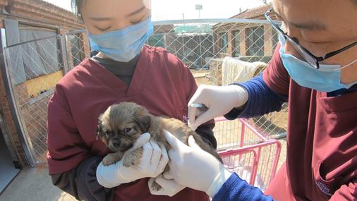 国内首辆公益性动物移动医疗车开启春季服务