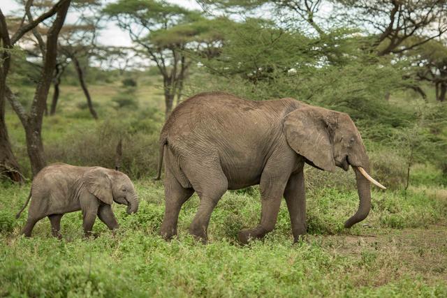 国际爱护动物基金会(IFAW)加入国际自然保护联盟