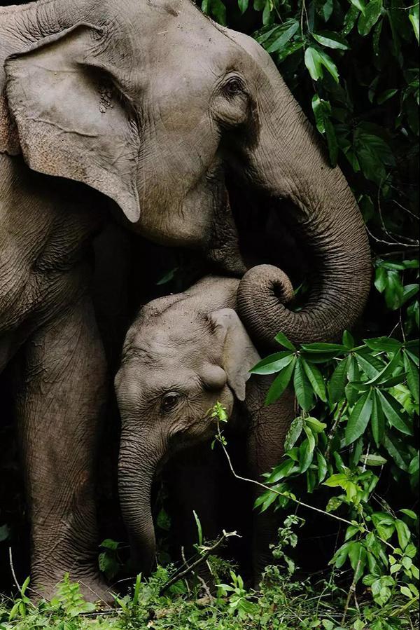 国家林业局剖析十大濒危物种保护案例:为世界留住独特美丽