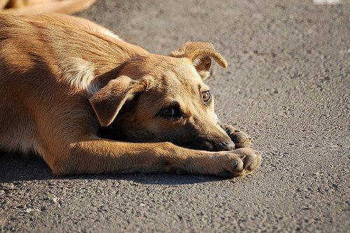 预防狂犬病要从犬只免疫做起