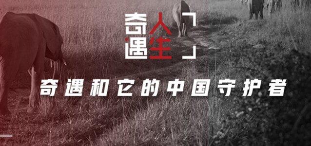 奇遇和它的中国守护者
