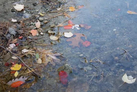 """瓦尔登湖已经不复当年的纯净,废水和游客都""""功不可没"""""""