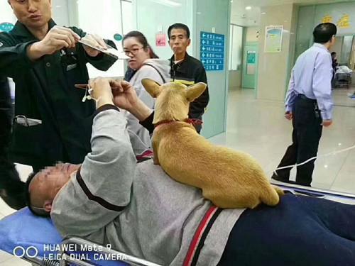 老人遛狗突发脑溢血 忠犬全程守护不让人靠近