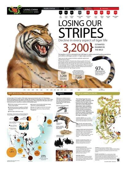 全球老虎日 共同关注老虎猎物保护