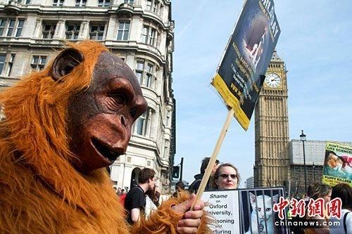 伦敦千人游行要求停止动物实验