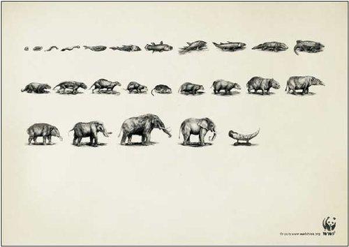 发人深省的动物保护公益广告(图)图片