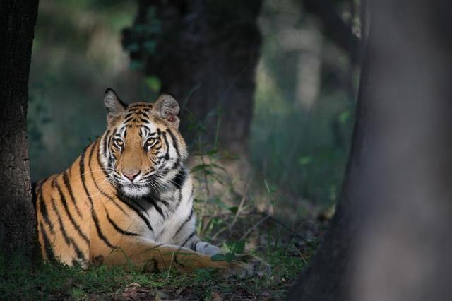 为动物发声,做自然守护者