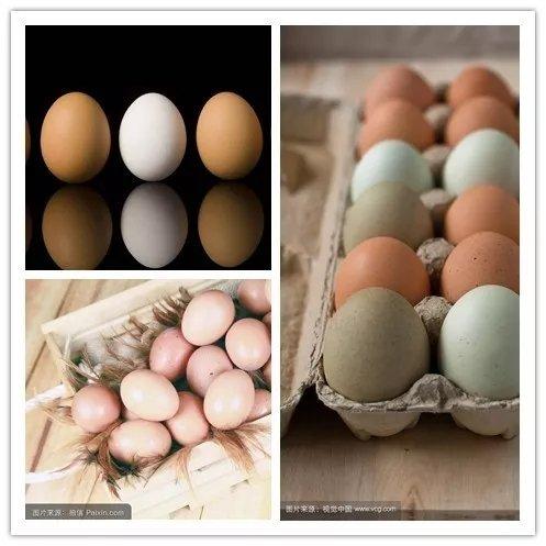千枚鸡蛋免费送!大奖任意抽!专业技师教您养车护车、换备胎!