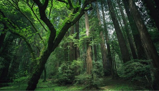 监测显示 2016年 贵州66个县森林覆盖率超过52%