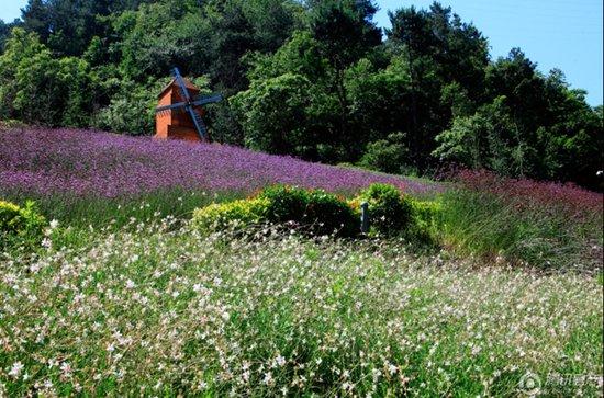 城市湿地公园中的植物景观营造