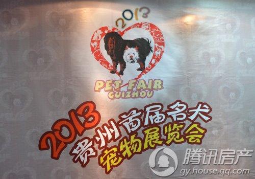 世界名犬聚首 贵州首届名犬宠物展览会5月开展