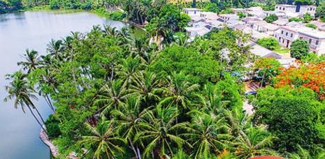 市树省树椰城椰岛 椰风海韵润琼岛