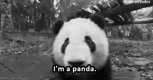 那些出了国的大熊猫 后来都怎么样了?