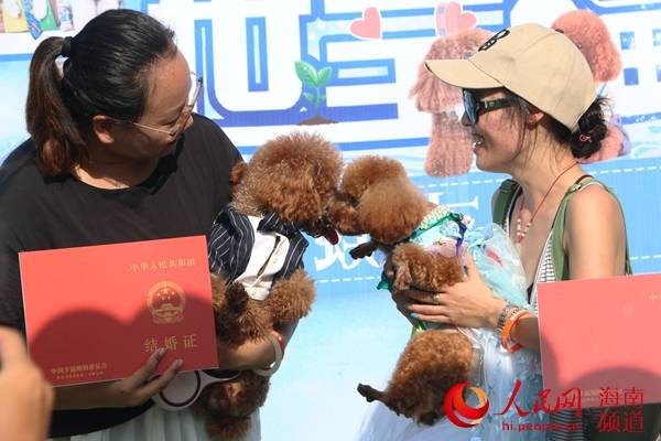 """一对泰迪狗""""情定""""蜈支洲岛 举行浪漫婚礼""""撒狗粮"""""""